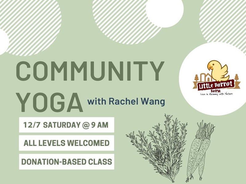 Community Yoga at Little Parrot Farm