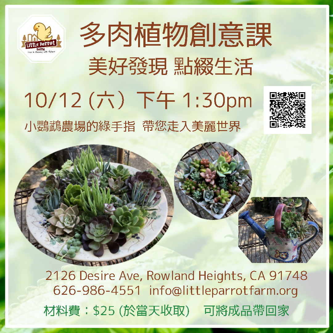 多肉植物創意課 Succulent Arrangement Workshop